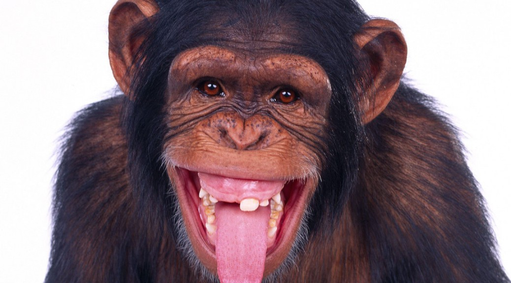 Lovable chimp 1038x576